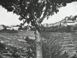 CREMOLINO *ALESSANDRIA 1954 - Italia
