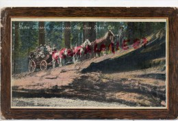 ETATS UNIS -CALIFORNIE- FALLEN MONARCH MARIPOSA BIG TREE GRAVE -ATTELAGE -S. HAGENAUER VILLA SOMMEILLER -75  PARIS 75016 - Etats-Unis