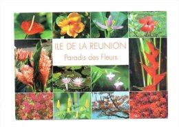 Ile De La Réunion - Paradis Des Fleurs - Ohne Zuordnung