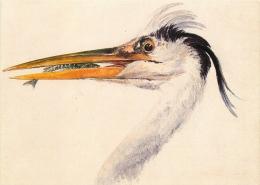 Turner, JMW  Head Of A Heron With A Fish City Art Gallery Leeds Art Postcard - Peintures & Tableaux