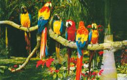 Panama Macaws and Poinsettias