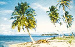 Panama Palm Lined Beach Of San Blas