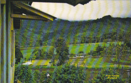 Panama Farmed Land In Cerro Punta Province Of Chiriqui