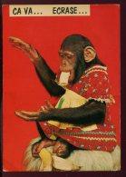 CPM Humoristique Ca Va .... Ecrase  Singe Chimpanzé - Apen