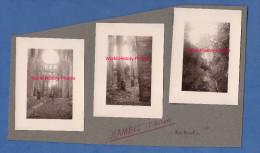 3 Photos Anciennes - HAMBYE ( Manche ) - Visite De L'abbaye - Lieux