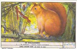 Liebig S1655 Rodents No 3 Squirrel - Liebig