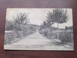Pensionnat Des Ursulines THILDONCK ( Wespelaer ) N° 9 Une Allée De Jardin - Anno 1910 ( Zie Foto Voor Details ) !! - Haacht
