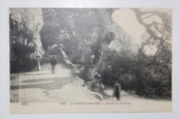 AA  - La Sainte Baume - La Montée De La Grotte - Saint-Maximin-la-Sainte-Baume