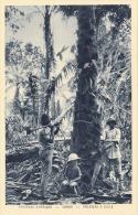 GABON (Gabun) ... Paysage De Afrique, Palmiers A Huile, 1920? - Gabun