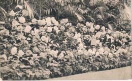 Gent  Exposition 1913  Fleurs  Bloemen - Gent