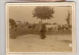 Photo Collée Sur Carton Agricultute Elevage Marché Aux Bestiaux ? Coiffe Régionalisme - Métiers