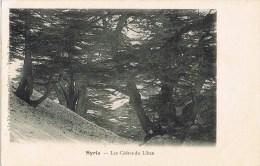 9337. Postal Cedros De Libano En SIRIA - Siria