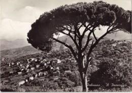 CPSM - PALINURO - Il Paesaggio - Salerno