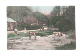 CARNANTON MILL LAURIES MILL NR NEWQUAY ST COLOMB CARNANTON WOODS  COWSGRAZING CORNWALL - Other