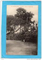 INDOCHINE-COCHINCHINE-GIA   DINH-palmier à Double Tronc -colonial Assis- Edit Poujade De Laudévèze - Vietnam