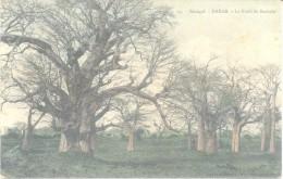 SENEGAL - RUFISQUE - édition VERNERET - Forêt De Baobabs - Cliché Avant 1903 VOYAGEE 1909 A FAMILIA AMUCHASTEGUI L'ARGEN - Senegal