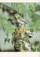 Birds, Oiseaux, Trauerschnepper Card 127 - Vögel
