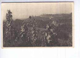 Slovenske Gorice Unused Postcard  (cb1976) - Slowenien
