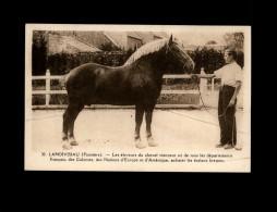 29 - LANDIVISIAU - Etalons Bretons - Cheval - Landivisiau