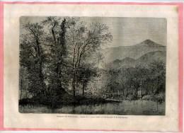 - CHATAIGNIER DE LA NAVE . GRAVURE SUR BOIS DU XIXe S . DECOUPEE ET COLLEE SUR PAPIER . - F. Trees & Shrub