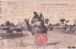 SENEGAL, CAYOR, Chameliers Maures - Senegal