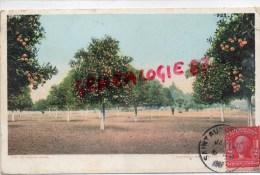 ETATS UNIS - FLORIDE - SAINT AUGUSTINE - AN ORANGE GROVE   1907 - St Augustine