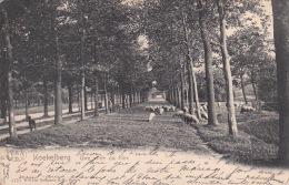 Koekelberg 26: Une all�e du Parc 1904 ( Moutons )