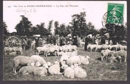 VALOGNES . Le Parc Des Moutons . - Valognes