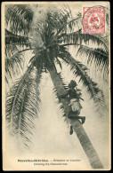 NOUVELLE CALÉDONIE - N° 92 / CPA D'UNE HOMME GRIMPANT AU COCOTIER, OBL. NOMÉA LE 11/7/1906, POUR LE CALVADOS - TB - Briefe U. Dokumente