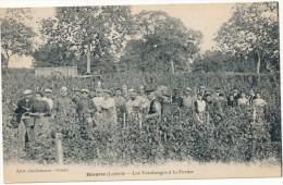 BRIARE - Rivotte - Les Vendanges à La Ferme - Briare