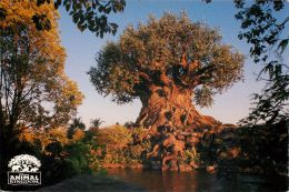 Tree Of Life, Animal Kingdom, Disneyworld, Orlando, Florida, USA Postcard Used Posted To UK 1999 Stamp - Disneyworld