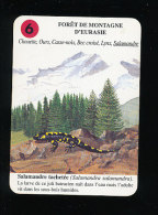 Salamandre Tachetée / Batracien Salamandra Faune Animal / IM 126/26 - Vieux Papiers