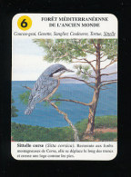 Sitelle Corse - Sitta Corsica / Oiseau  / IM 126/26 - Other