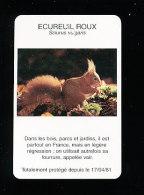 Ecureuil Roux / Animal Squirrel / Fourrure Vair  / IM 126/25 - Other