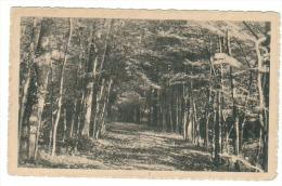 (J521) - Pensionnat De St-André - Ramegnies-Chin - Sous-bois Dans Le Parc - Tournai