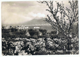 Carte Panorama  Naple    Alterocca Terni    1960 - Napoli (Naples)
