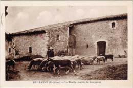 04 – REILLANNE – Le Moulin (sortie Du Troupeau) (moutons) - France