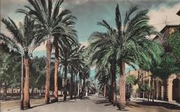 Espagne - Islas Baleares - Mallorca - Palma -  Paseo Sagrera - Mallorca