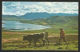PERU Cuzco Plowing The Soil With Oxen 1981 - Pérou