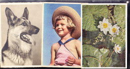 ALLEMAGNE, LOT DE 14 CARTES POSTALES, LA PLUPART AVEC TROUS D' ARCHIVE. (4C5) - 5 - 99 Postkaarten