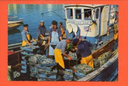 """29 AUDIERNE : Débarquement De La Sardine N°20365 """"jean"""" Pêche Bateau """"Bernard Marie(grand Format, écrite, Non Oblitérée) - Audierne"""