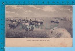 West Canada ( Loading The Grain   Animated Horses Grain Wagon Harvest Cir. 1910 Used )  2 SCAN - Paysans