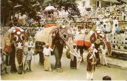 POSTAL DE CEILAN CON UNOS ELEFANTES  (ELEFANTE-ELEPHANT) - Elefantes