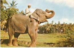 POSTAL DE CEILAN CON UN ELEFANTE EN UNA PLANTACION  (ELEFANTE-ELEPHANT) - Elefantes