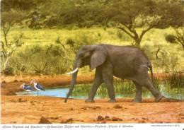 POSTAL DE SUDAFRICA CON UN ELEFANTE AFRICANO Y MARABUS  (ELEFANTE-ELEPHANT) - Elefantes