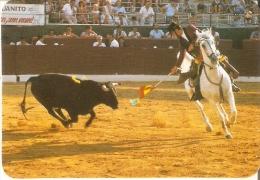 CALENDARIO DEL AÑO 1986 DE UN TORERO  (TORO-BULL) (CALENDRIER-CALENDAR) - Calendarios