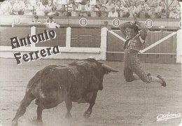 CALENDARIO DE ESPAÑA DEL AÑO 1998 DEL TORERO ANTONIO FERRERA  (TORO-BULL) (CALENDRIER-CALENDAR) - Tamaño Pequeño : 1991-00