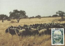 South West Africa 1986 Swakara, 25c Sheep, Maximum Card - Unclassified