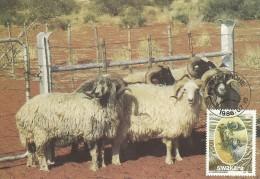 South West Africa 1986 Swakara, 30c Rams, Maximum Card - Unclassified