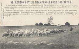 99 MOUTONS ET UN CHAMPENOIS FONT 100 BETES - Paysans